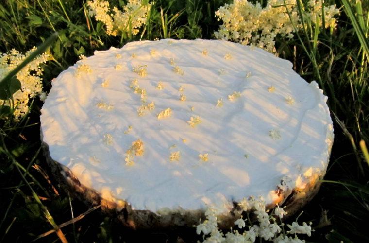 Bezinkový cheesecake