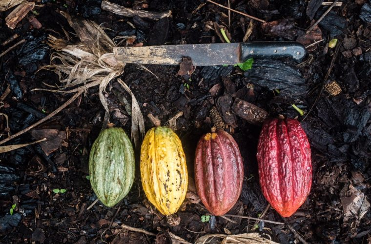 Ve vlastní šťávě s Maškrtnicí: Supermarketová čokoláda lesy neviděla, jak vzniká ta pravá?