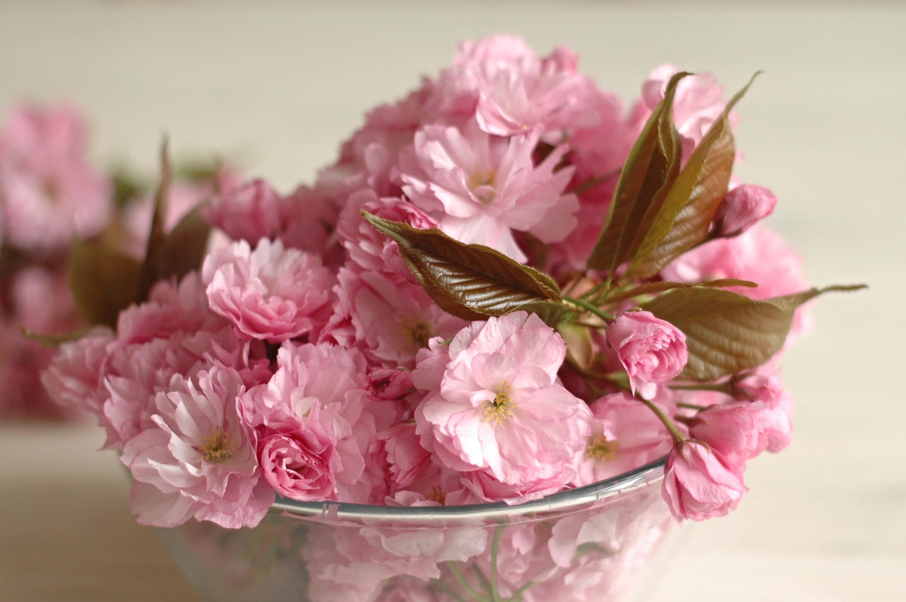 Nakládané květy sakury